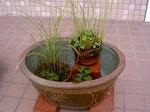 睡蓮鉢に鉢を寄せる.jpg