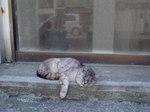 旅先の猫.jpg